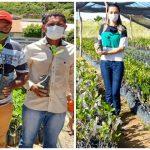 Secretaria de Agricultura de Vera Mendes distribui 2 mil mudas de caju e beneficia centenas agricultores